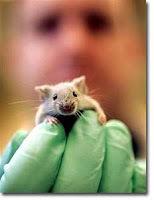 14d18-lab-rat1