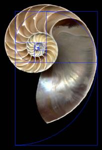 log_spiral