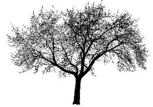 silhouette-tree