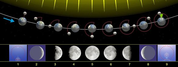 1280px-Moon_phases_00